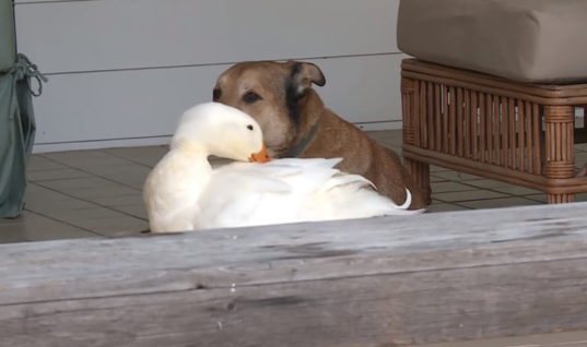 This Poor Dog Was in Mourning for His Best Friend, Then an Unlikely Companion Arrived