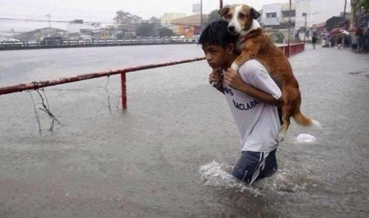 40 Amazing Animal Rescues That Will Warm Your Heart