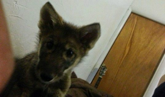 College Kid Brings Home A Stray Puppy, Later Finds Out It's Something Else