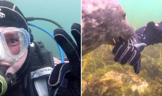 Seal Keeps Asking Diver For Something, But He Doesn't Know What Until He Grabs His Hand