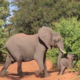 When These Tourists Spotted An Elephant, They Had No Idea How Much Danger They Were In