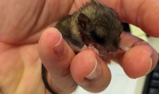 Man Rescued Strange Tiny Creature, But He Had No Idea What It Would Grow Into