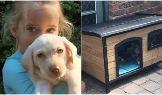 Three Days After Thieves Stole A Little Girl's Puppy The Family Found Something Moving Next To A Kennel