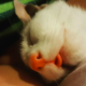This Poor Kitten Was Trapped Under A House, But When Rescuers Came They Noticed Something Strange