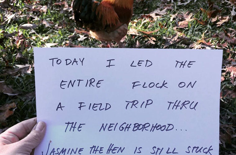 "Farmers Are Shaming Chickens for Their ""Crimes,"" The Results Are Hilarious"