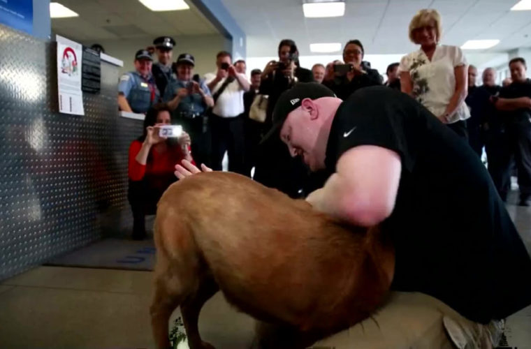 Years After Losing Her Partner on the Field, This Military Dog Got the Surprise of Her Life