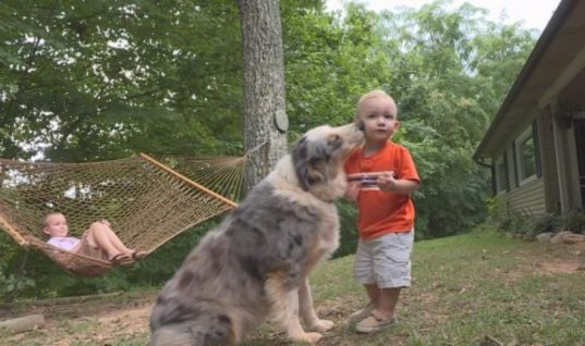 When A Snake Threatened A Toddler, His Dog Saved the Day