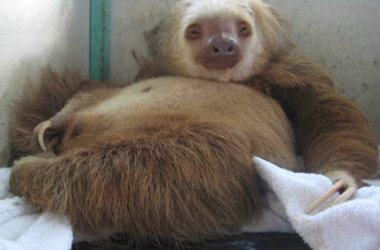 30 Pregnant Animals Who Just Want the Baby Out of Them Already