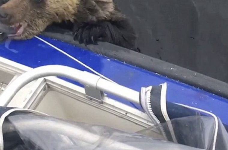 Boaters Notice Drowning Bear Cubs, Work Tirelessly To Save Them